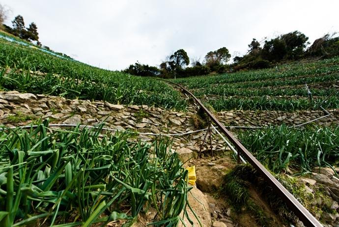 津和地は急斜面にタマネギ畑があります
