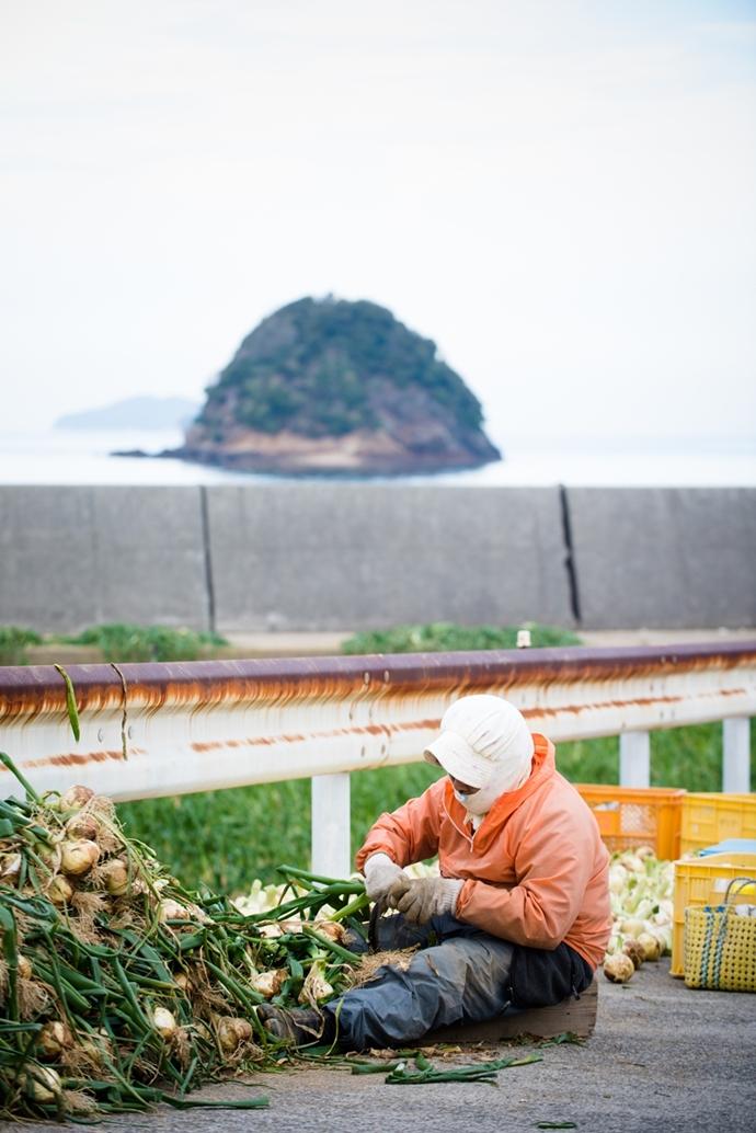 海のすぐそばで津和地玉ねぎは育てられます