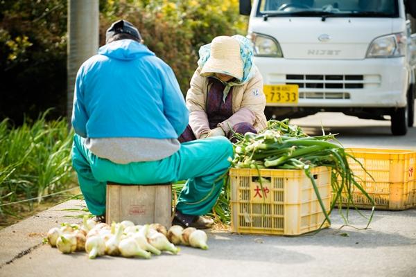 島民が元気に仕事をする津和地島