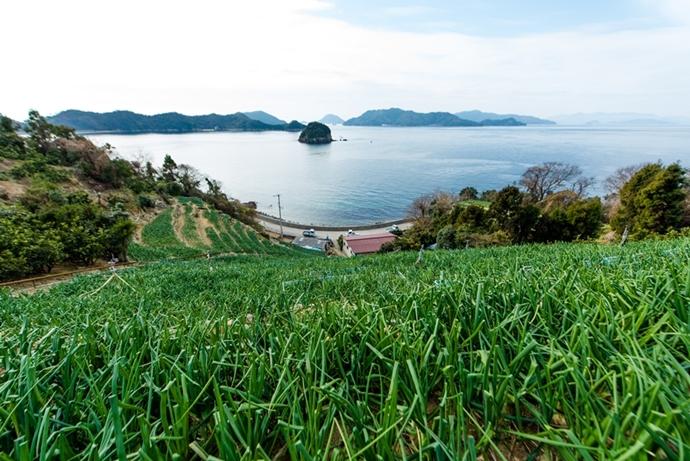 段々畑に登って津和地を見下ろしてください