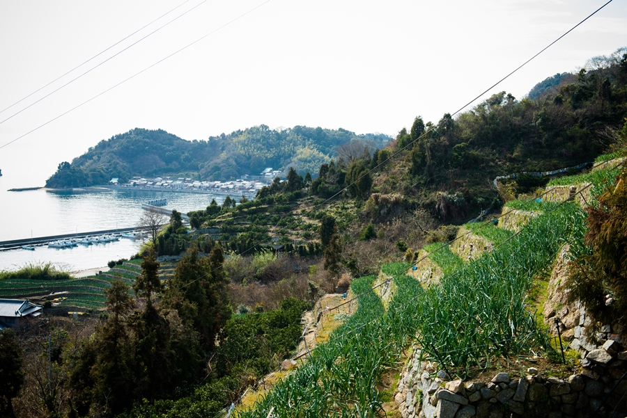 津和地の段々畑